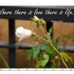 """""""Love"""" – Friday's Quotes"""