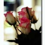 Please Buy Me Flowers