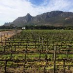 The Constantia Wine Route: Need to Know Facts