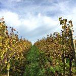 Clos Malverne Wine Estate Lifestyle Package