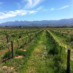 Excelsior Wine Estate Making Treasured Memories