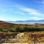 Vondeling Wines Hidden Gem in Voor-Paardeberg